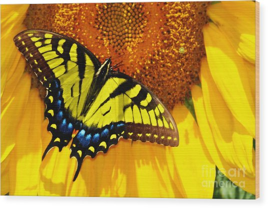 Butterfly And The Sunflower Wood Print