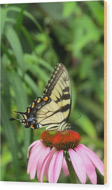 Butterfly Wood Print by Andrea Dale