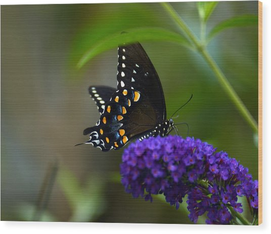 Butterfly Atttaction Wood Print