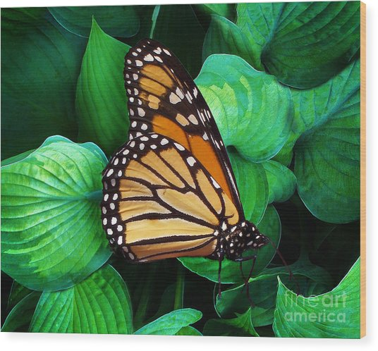 Butterfly Be Still Wood Print