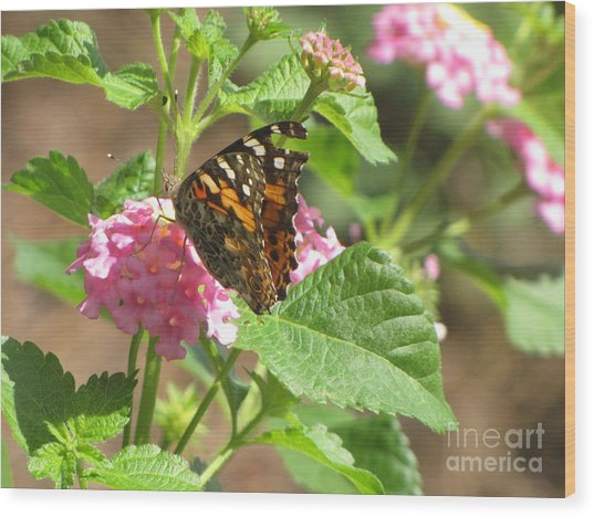 Butterfly Bloom Wood Print by Gayle Melges