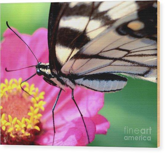 Butterfly Brunch Wood Print