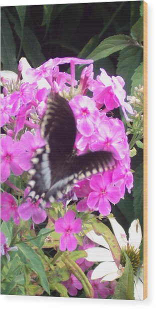 Butterfly Wood Print by Cynthia Harvey