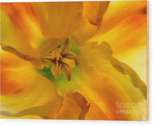 Butterfly Daffodil Springtime Wood Print