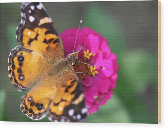 Butterfly Dance Wood Print