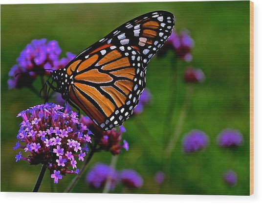 Butterfly Journey Wood Print
