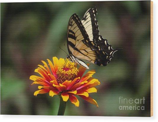 Butterfly Delight Wood Print by Nancy Edwards