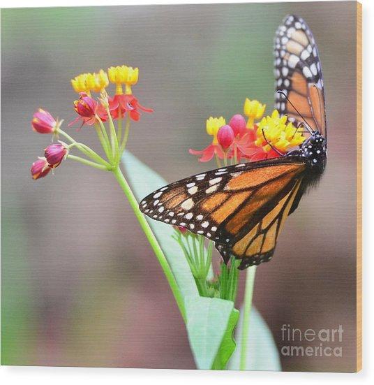 Butterfly Flower - Gossamer Wings Embrace Candy Blossoms Wood Print by Wayne Nielsen