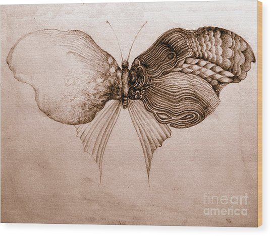 Butterfly For Jeffrey Wood Print