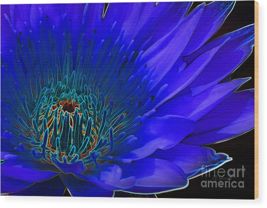Butterfly Garden 11 - Water Lily Wood Print