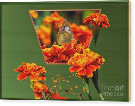 Butterfly In A Sea Of Orange Floral 02 Wood Print