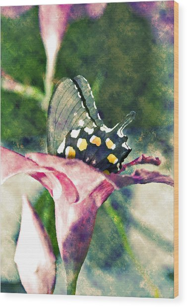 Butterfly In Flower Wood Print