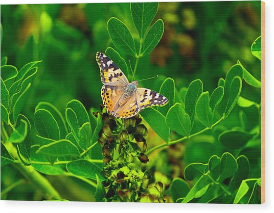 Butterfly In Paradise Wood Print