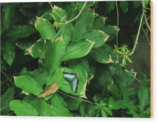 Butterfly In Rain Forest Wood Print