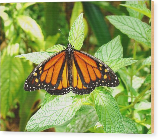 Butterfly In The Plants Wood Print by Van Ness