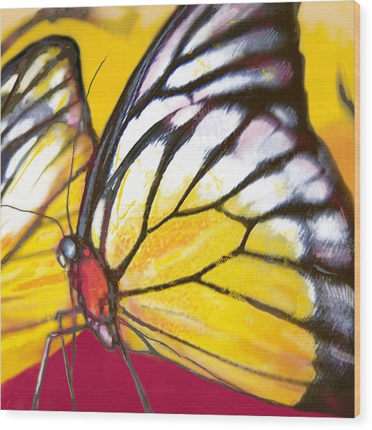 Butterfly - Insect Stylised Pop Art Drawing Potrait Poser Wood Print by Kim Wang