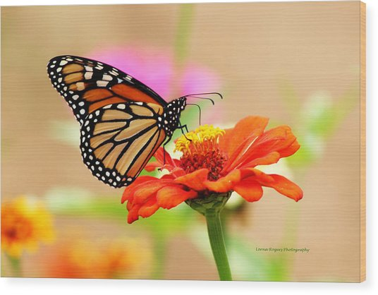 Butterfly Lunch Wood Print