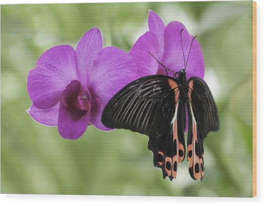 Butterfly Magic Wood Print