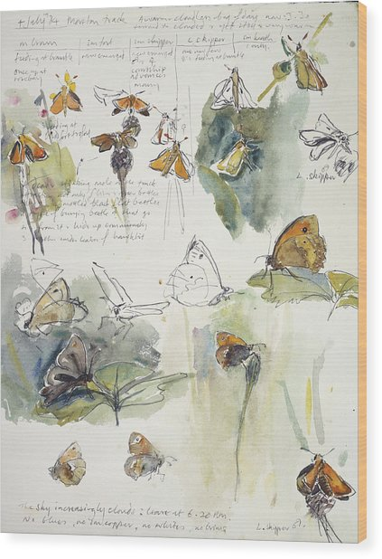 Butterfly Observations Wood Print