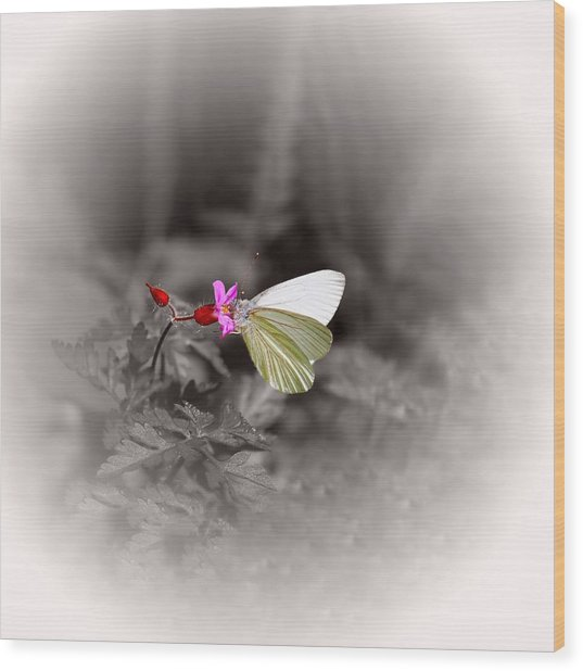 Butterfly On A Pink Flower Wood Print