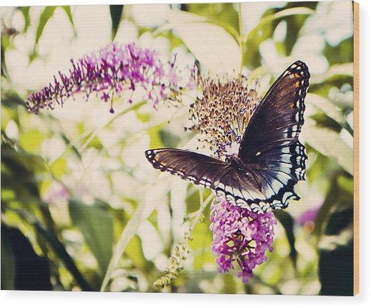 Butterfly On Butterfly Bush Wood Print
