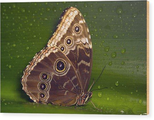 Butterfly On Green  Wood Print by Sebastiaan Bosma
