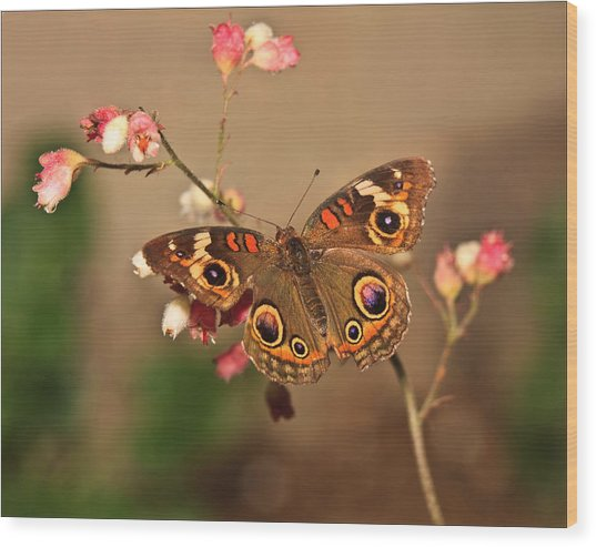 Butterfly On Pink Wood Print