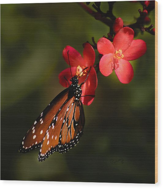 Butterfly On Red Blossom Wood Print