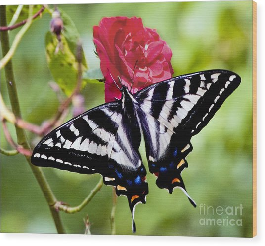 Butterfly On Rose Wood Print