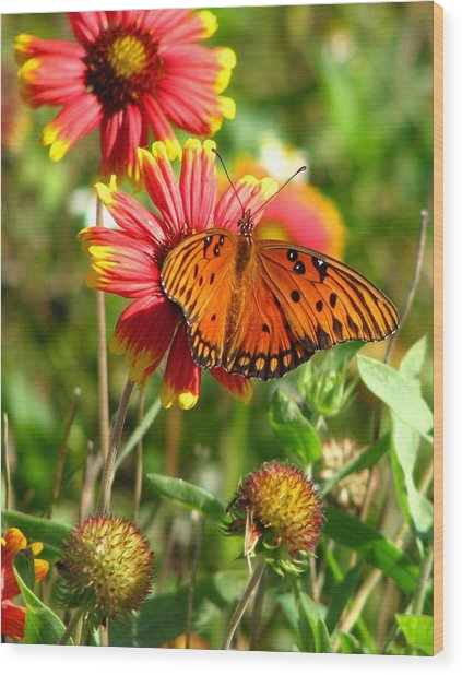 Butterfly One Wood Print by Peggy Burley