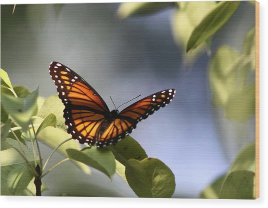 Butterfly -  Soaking Up The Sun Wood Print