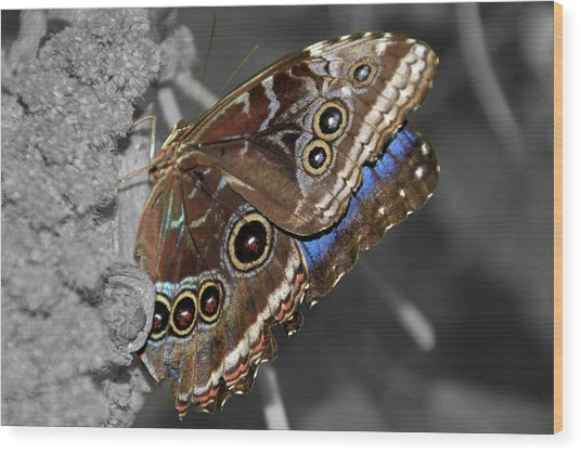 Butterfly Spot Color 1 Wood Print