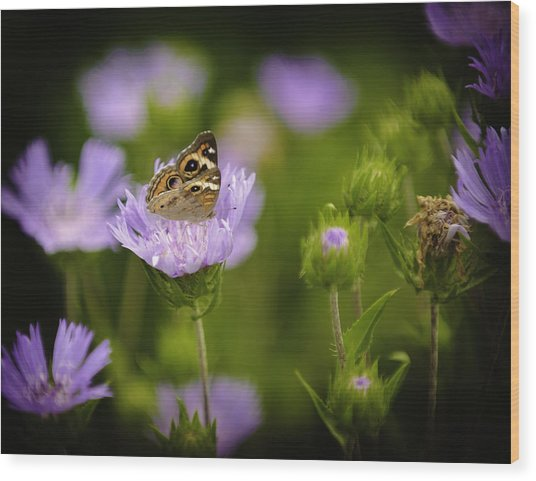 Butterfly Spotlight Wood Print