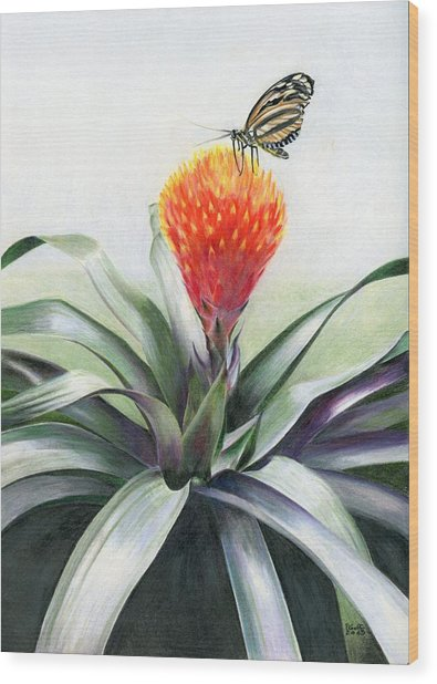 Butterfly Sunning In Costa Rica Wood Print