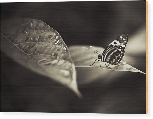 Butterfly Warm Tone Wood Print