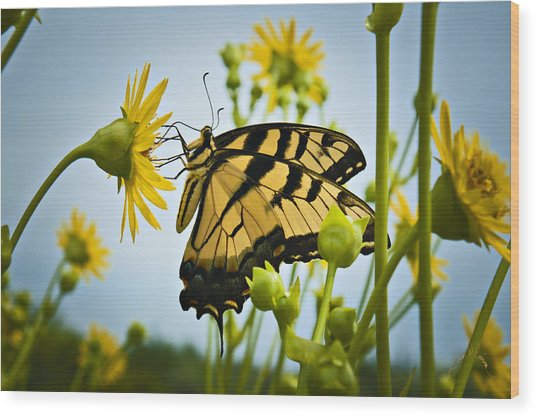 Butterfly Wood Print by Williams-Cairns Photography LLC