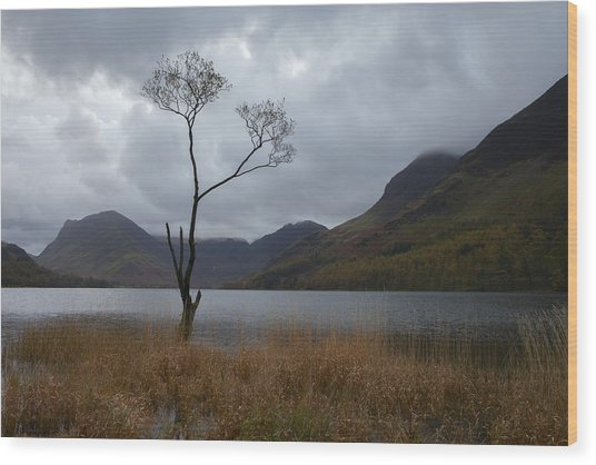 Buttermere Tree Wood Print