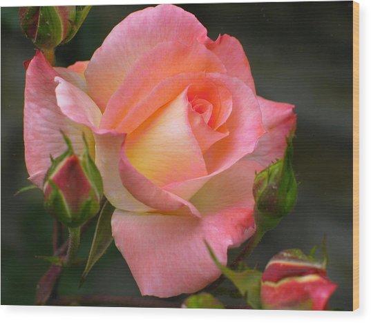 Buttermilk Pink Wood Print