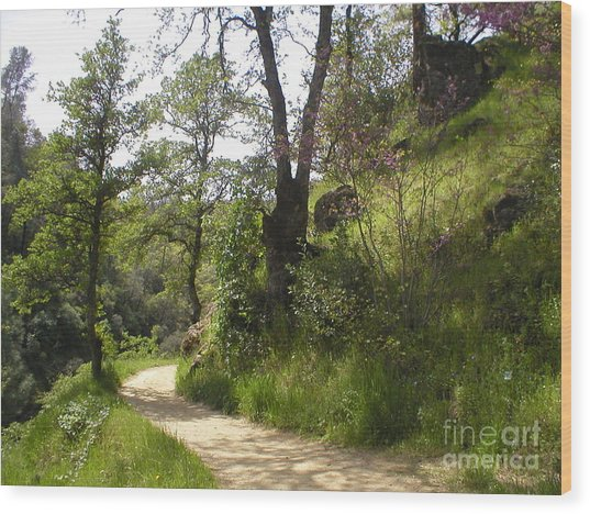 Buttermilk Trail South Yuba Wood Print