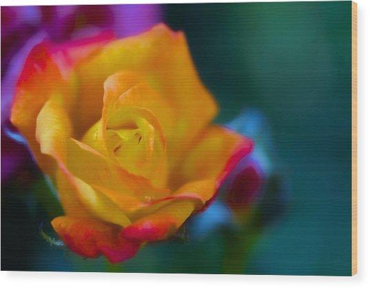 Butterscotch Rose Wood Print
