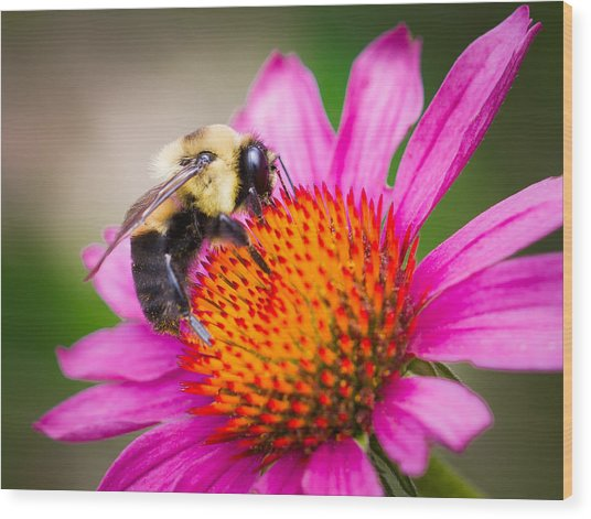 Buzzed In Eureka Springs Wood Print