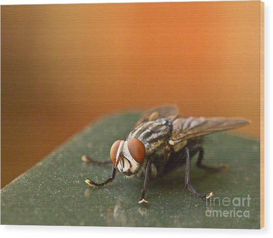 Buzzzzzzz  Wood Print