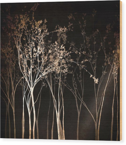 By The Light Of The Moon Wood Print