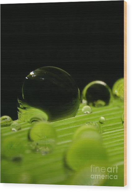 C Ribet Orbscape Water Soul Wood Print
