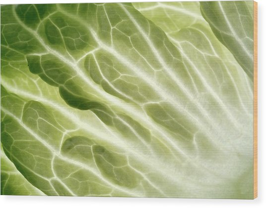 Cabbage Leaf Veins Wood Print by Uk Crown Copyright Courtesy Of Fera/science Photo Library