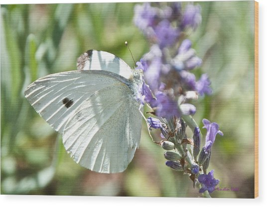 Cabbage White On Lavender  Wood Print