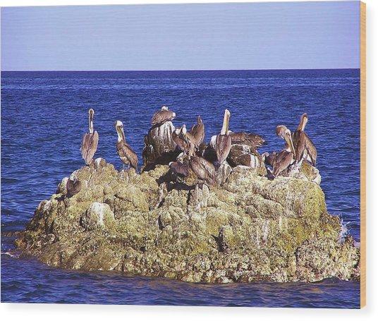 Cabo Pelicans Wood Print