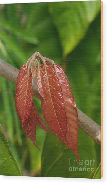 Cacao Leaf New Growth Wood Print