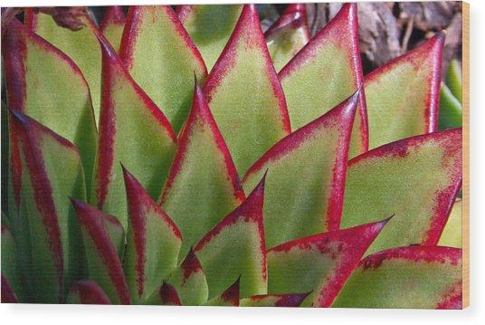 Cactus 3 Wood Print