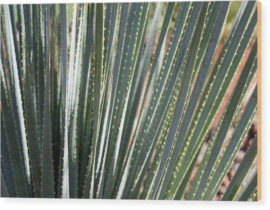 Cactus 8 Wood Print